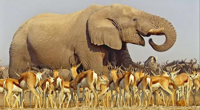 非洲 BBC: Africa (2013)