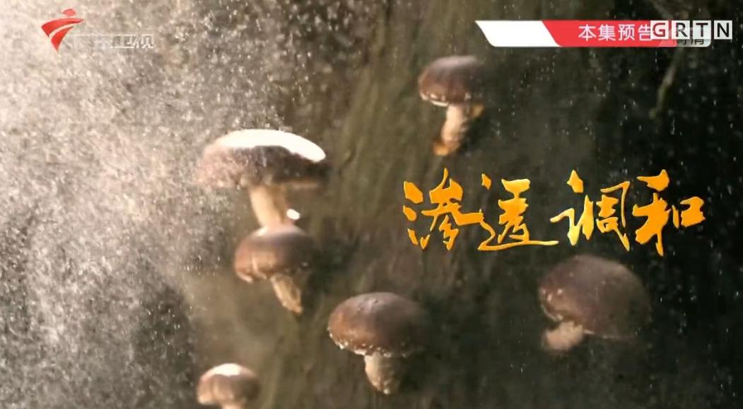 老广的味道 第一季 (2016) 美食纪录片