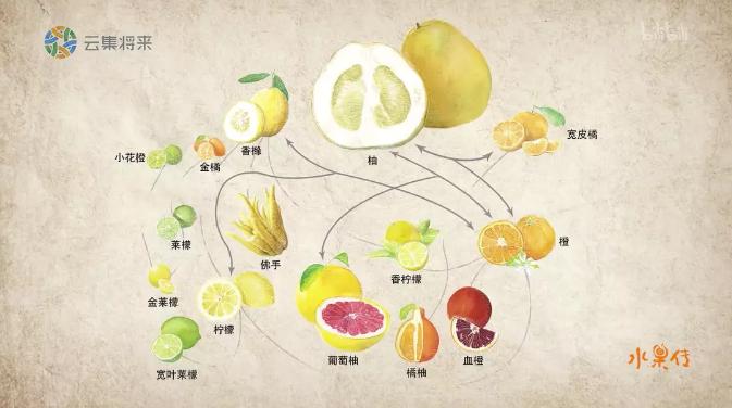水果传 (2018) 纪录片