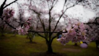 侘寂之美:日本不同寻常的世界观