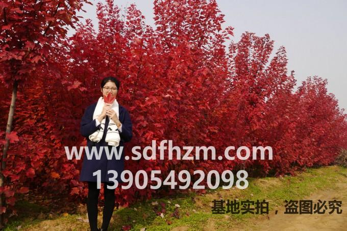 FSpwA1.jpg