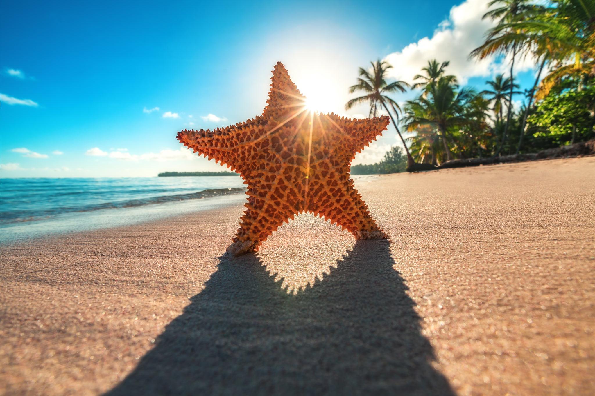 海星 沙滩 椰子树 阳光 清新沙滩海星高清电脑桌面壁纸插图