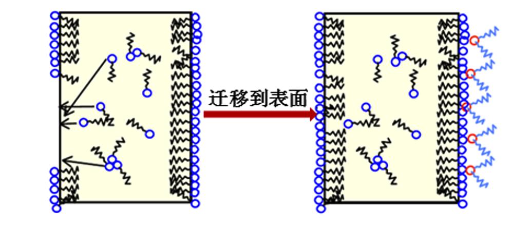 利用嵌段共聚物与低分子量抗静电剂分子的自组装,设计本体抗静电材料