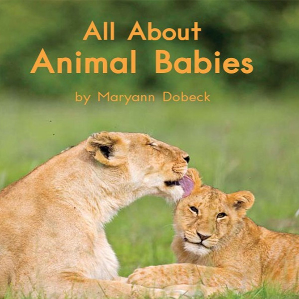 cover allaboutanimalbabies