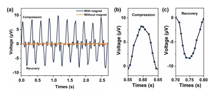 图3 4D打印成形柔性磁电器件在外力作用下产生的电压曲线图(a)磁粉含量为40wt%、压缩速率为50mm/s、磁电器件压缩的应变为20%时,器件在压力作用下产生的电压;(b)一个周期内压缩过程产生的电压;(c)一个周期内回复过程产生的电压