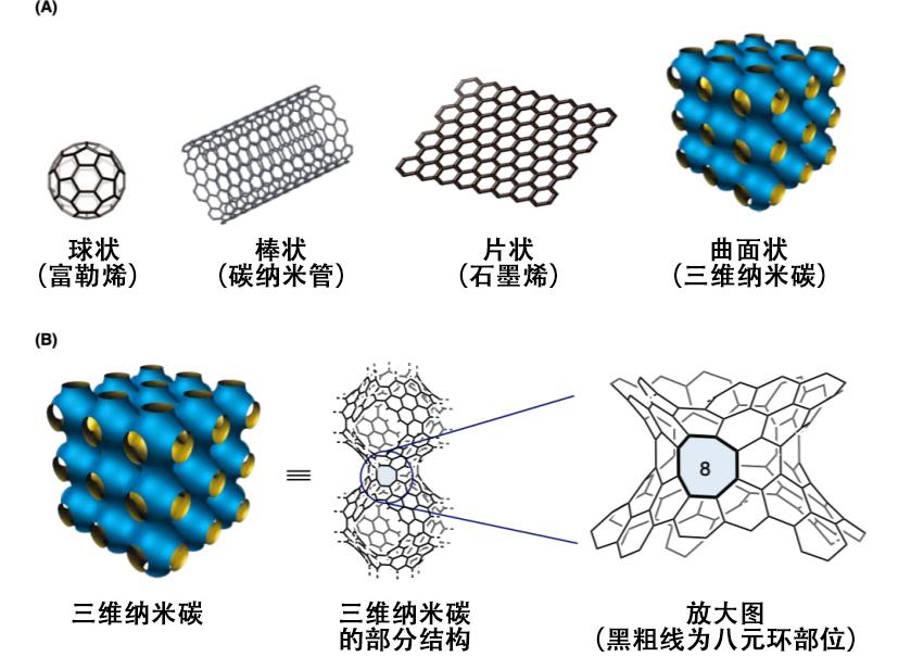 图1:纳米碳 (A)纳米碳是仅由碳原子构成的物质。根据结构进行分类 。(B)详细显示了三维纳米碳的部分结构。放大部分结构可以发现,含有八元环部位。