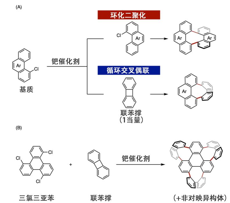 图3:此次研究实现的合成反应 (A)利用钯催化剂的环化二聚反应和环化交叉偶联反应(B)三个连续的八元环构筑反应