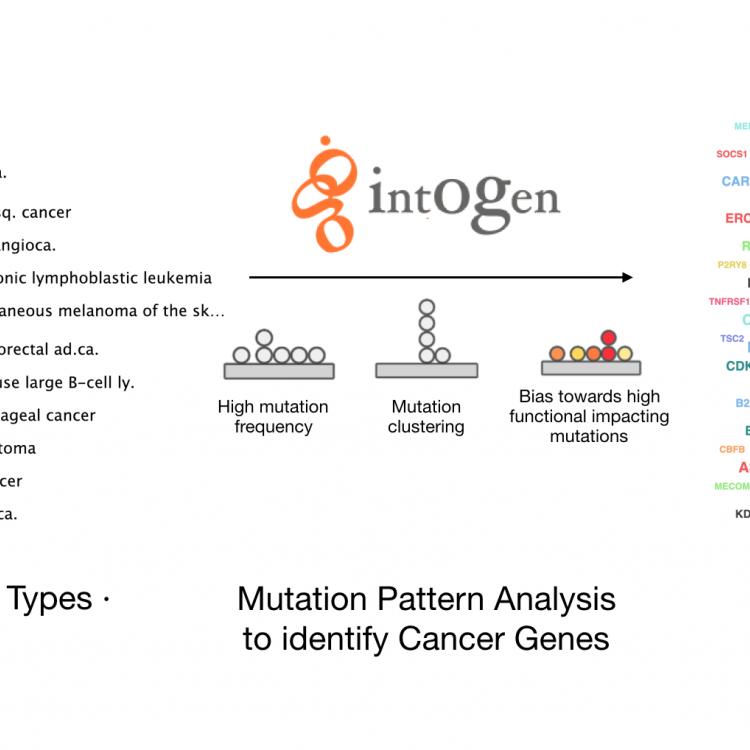 由巴塞罗那IRB的生物医学基因组学实验室执行的这项研究对整合型肿瘤基因组学(IntOGen)平台进行了重大更新,旨在鉴定突变的癌症驱动基因。