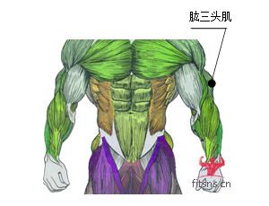 哑铃颈后臂屈伸行动方法-追梦健身网