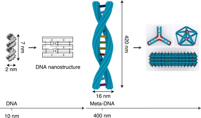 中美创建微米级元DNA结构有助设计更复杂电路和纳米器件