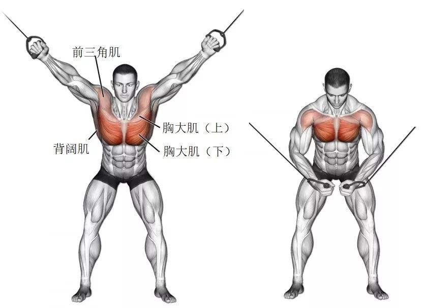 胸部徒手练习行动 原来是这几个行动-追梦健身网