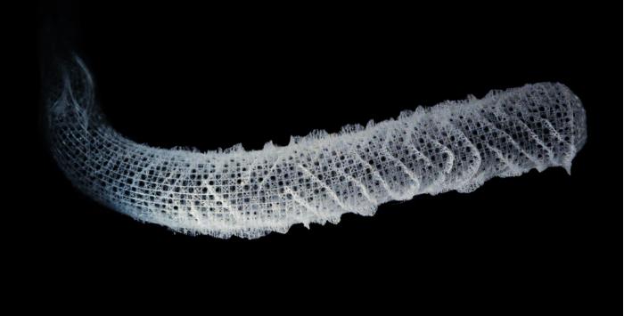 受海绵骨骼启发 科学家开发出更强更轻的承重结构
