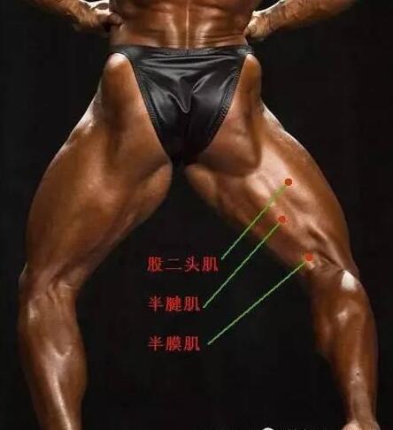 徒手怎样练成强健的腿部肌肉?-追梦健身网