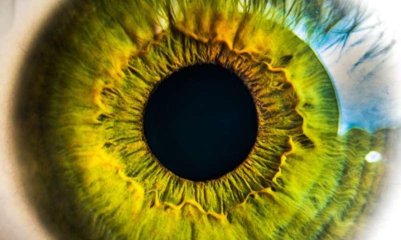 科学家确定一种化合物发现具有逆转视力的潜力