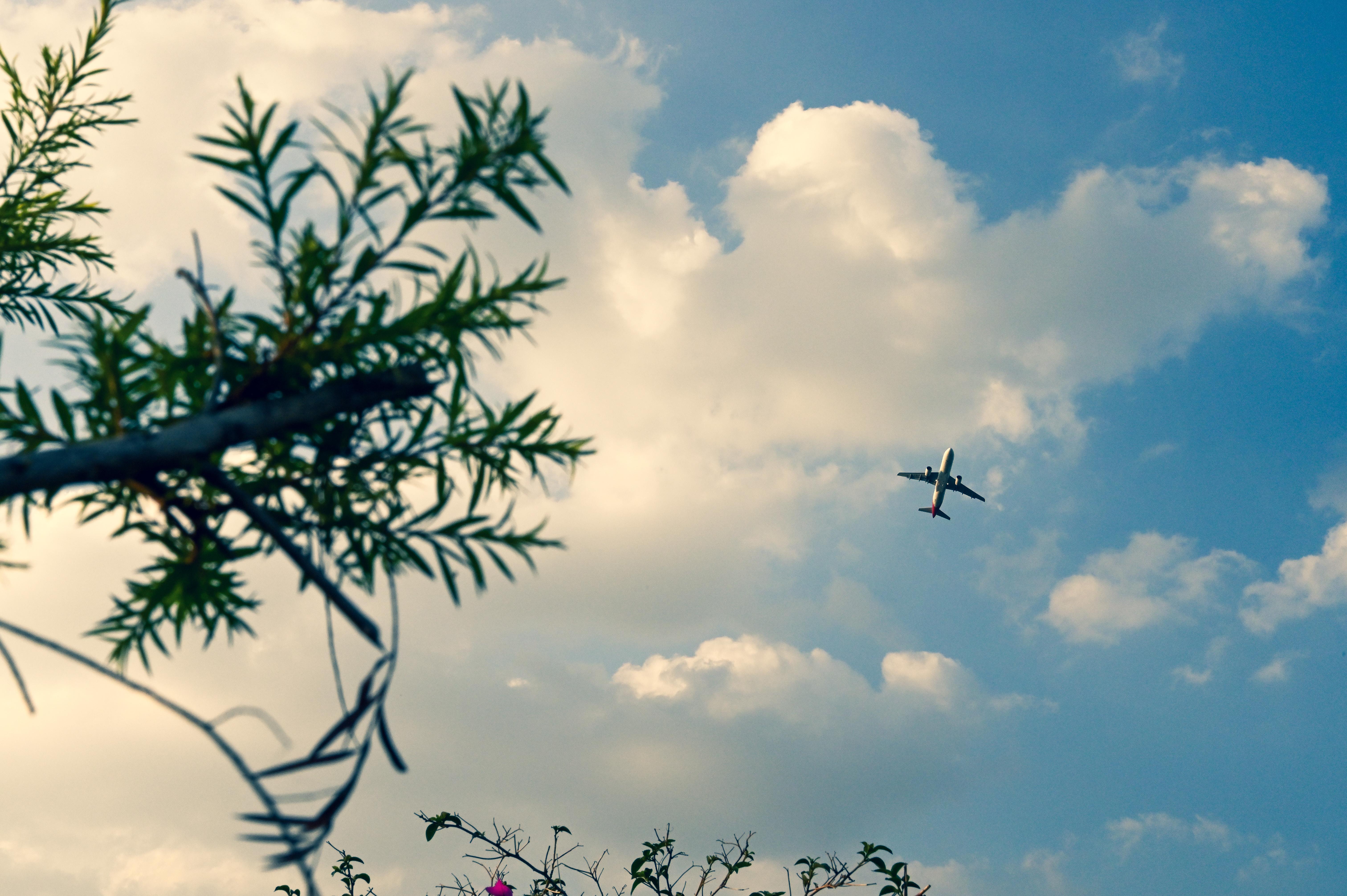 空港花田的天空